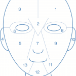 Face Mapping Grid