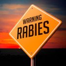 Rabies (Instramuscular) Vaccine