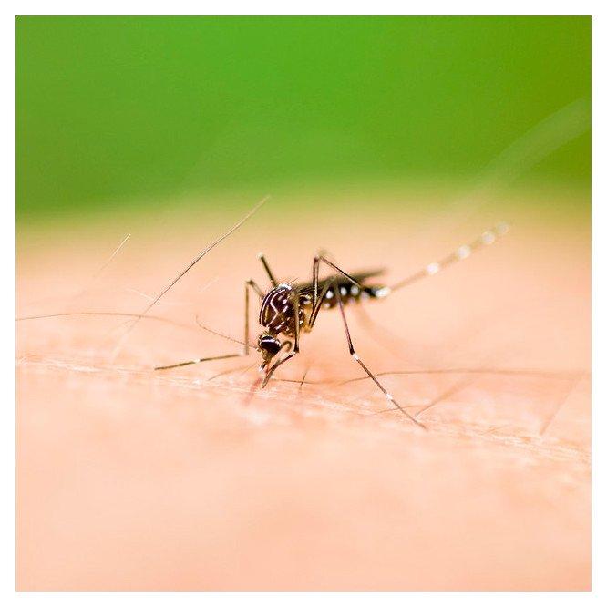Malaria (oral)